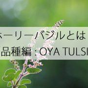品種 オオヤトゥルシーについて